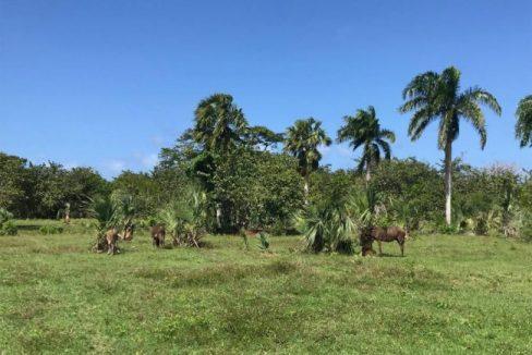 Cambiaso-Beachfront-Ushombi-10