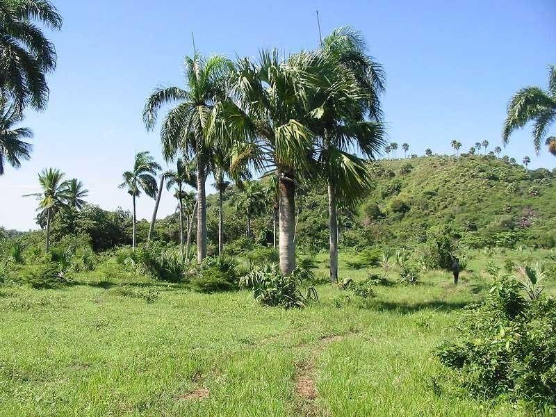 Cambiaso-Beachfront-Ushombi-9