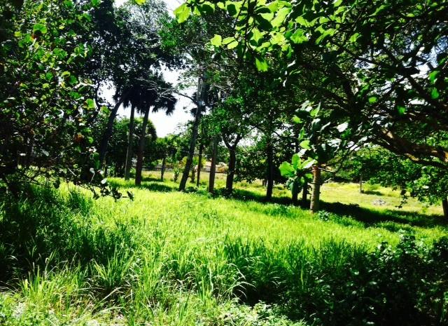 Cabarete-Beachfront-Lots-Dominican-Republic-Ushombi-4