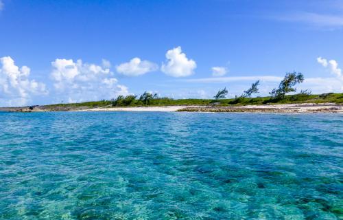 Spectabilis-Island-Bahamas-Ushombi-12