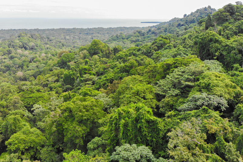 Cahuita-Ocean-and-Jungle-View-Farm-Development-Costa-Rica-Ushombi-1