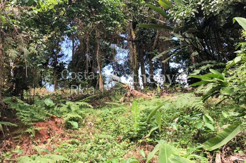 Cahuita-Ocean-and-Jungle-View-Farm-Development-Costa-Rica-Ushombi-13