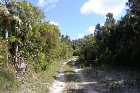 miss-ruby-banks-road-banks-road-governors-harbour-bahamas-ushombi-24
