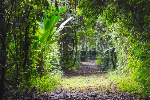 2-5-acre-conservation-land-with-precious-woods-costa-rica-ushombi-4