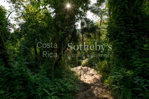 2-5-acre-conservation-land-with-precious-woods-costa-rica-ushombi-6