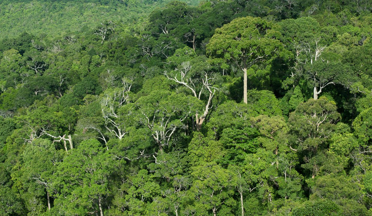 2-5-acre-conservation-land-with-precious-woods-costa-rica-ushombi-7