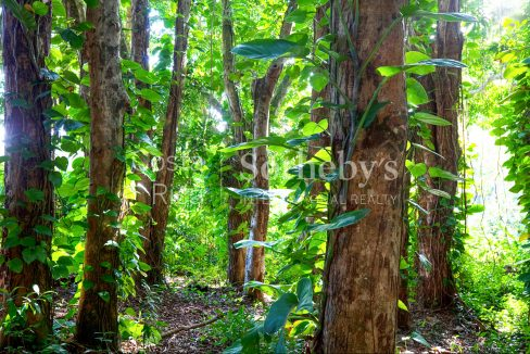 2-5-acre-conservation-land-with-precious-woods-costa-rica-ushombi-8