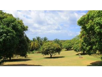 Westerlee-Westmoreland-St-James-Barbados-Ushombi-4