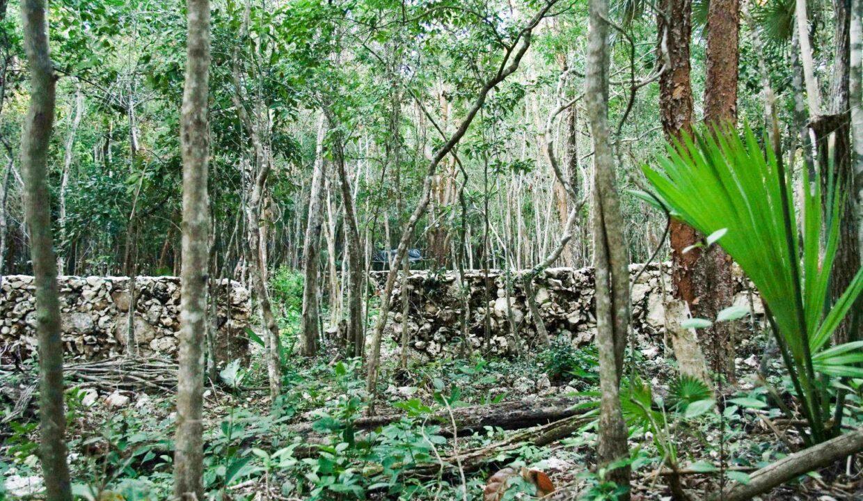 PURA-Mza.-180-04-Tulum-Quintana Roo-Mexico-Ushombi-5
