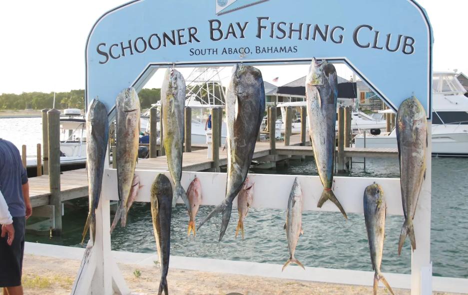 block-n-lot-13-schooner-bay-schooner-bay-abaco-bahamas-ushombi-7
