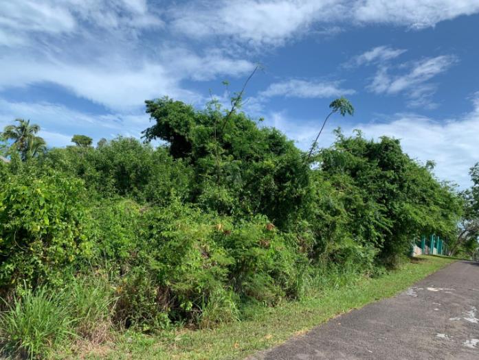 buttownwood-hills-new-providence-paradise-island-bahamas-ushombi-1