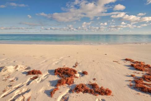 wild-orchid-banks-road-north-palmetto-point-palmetto-point-eleuthera-bahamas-ushombi-9