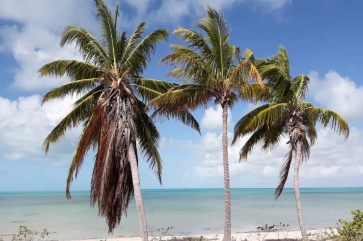 beachfront-acreage-lots-a-and-b-other-bahamas-bahamas-ushombi-4